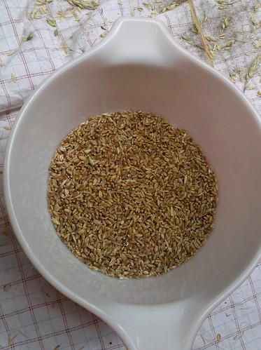 Wheat 14