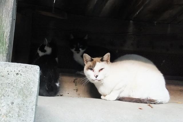 Today's Cat@2011-10-20