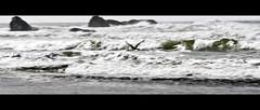 Möwe (Martin.Matyas) Tags: ocean usa beach animal animals strand canon tiere meer wasser natur himmel amerika vögel möwe landschaft tier vogel lapush naturaufnahme canonefs1785isusm eos400d naturescreations