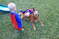 IMG_9104 (drjeeeol) Tags: dog pet halloween goldenretriever costume backyard katie tiger superman will superhero cape supergirl triplets toddlers 2011 36monthsold