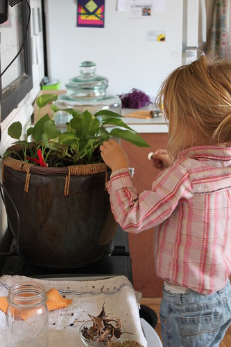 Montessori Practical  Life 3