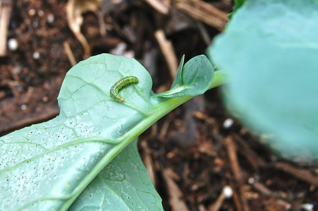 bad caterpillar