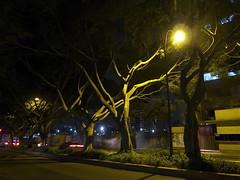 Oasis urbano (Roberto Hernndez Montoya) Tags: leica venezuela caracas leicadlux5