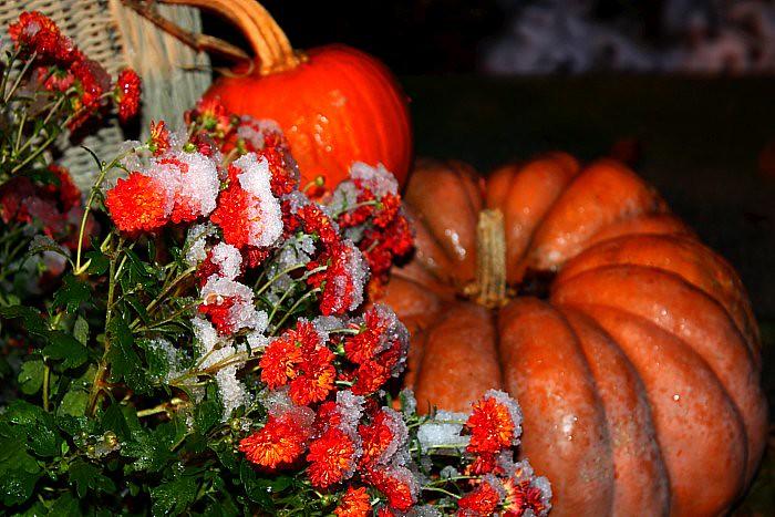 Autumn 2011 025