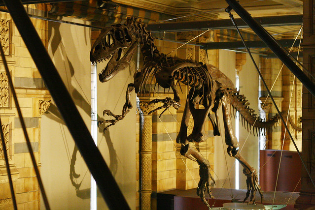 nsm dinosaur skeleton
