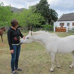 "Claudia with White Horse at De Bos <a style=""margin-left:10px; font-size:0.8em;"" href=""http://www.flickr.com/photos/14315427@N00/6298634348/"" target=""_blank"">@flickr</a>"