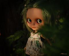 Sequoia ~ Melacacia Custom #98