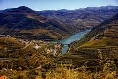 The Douro Valley, Portugal (samanthadjb) Tags: portugal water beautiful port river landscape vineyard vines wine winery porto vineyards douro dourovalley