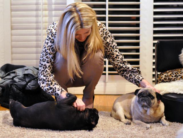 petting the doggies