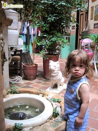 Turtle and Courtyard Casa Particular - Havana Centro Cuba