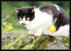 F_DSC_9698-貓-Cat-石頭-Rock-青苔-Moss-台北縣-台灣-Taiwan-中華民國-Rep of China-Nikon D90-Nikkor 24-120mm 4G (May-margy) Tags: rock cat moss taiwan practice 台灣 貓 青苔 台北縣 練習 中華民國 習作 石頭 nikond90 repofchina maymargy nikkor24120mm4g 廖藹淳