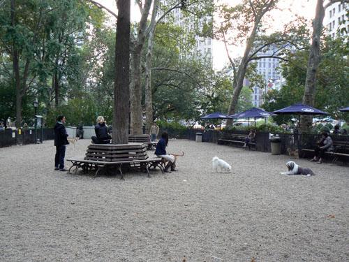 parc à chiens 1.jpg