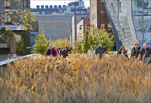 Field on the High Line by Alida's Photos