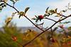 summer autumned (the_lighter) Tags: nikon d60 50mm ramo foglie autunno autumn abruzzo marsica cappadocia montagna mountain bacche