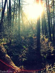 Through. (FadedKate) Tags: trees sun forest foliage through solarflare fadedkate