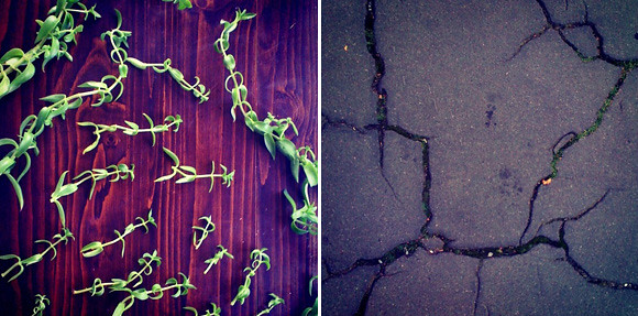 nature diptych