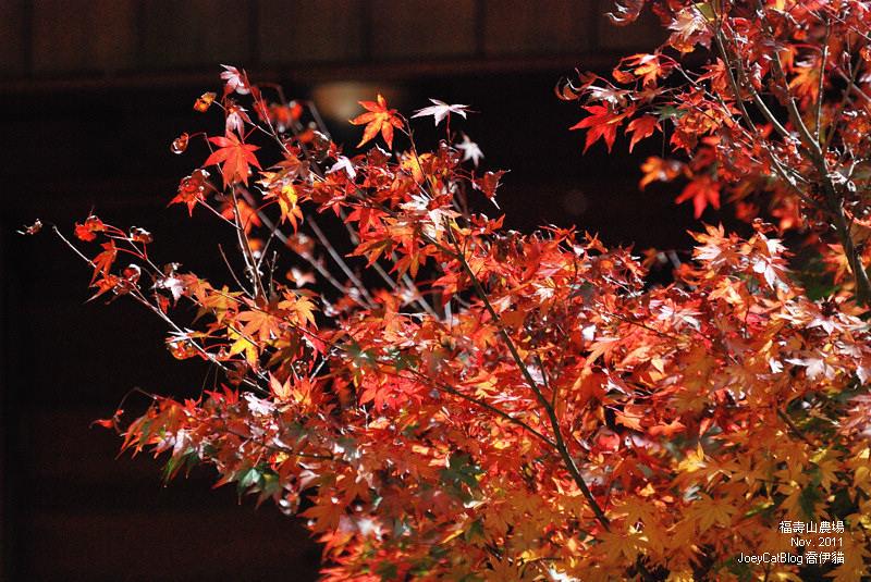 2011_1106福壽山農場DSC_3304