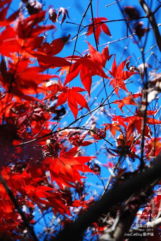 2011_1106福壽山農場DSC_3385