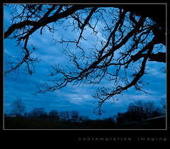 blue hour oak (contemplative imaging) Tags: november blue autumn trees sky usa color tree fall nature colors clouds digital rural america photography countryside photo illinois oak midwest branch natural image cloudy photos district bare branches country conservation overcast images il ill american valley area imaging bluehour limbs limb pleasant midwestern 2011 mchenrycounty contemplativeimaging ronzack lumgh1 lumg25 plv20111109 cigh1plv20111109151