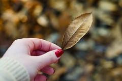 The leaves grow old (Kaat dg) Tags: autumn fall nature leaves leaf nikon hand bokeh nailpolish