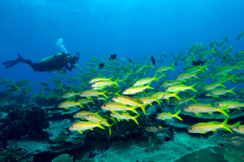 Ask the Expert: Scuba diving tips
