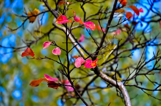 otoño 8
