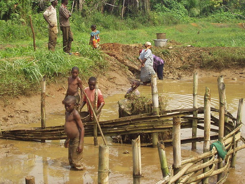 Aquaculture, Cameroon. Photo by Randall Brummett, 2002