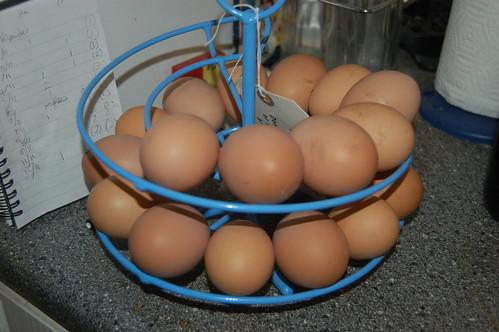 eggs Nov 11