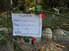 21 (marianauchoa2011) Tags: flres