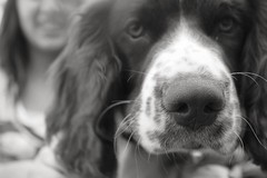 (EmilyGrace Photography) Tags: b blackandwhite bw dog cute puppy nose eyes pretty w whiskers doggy