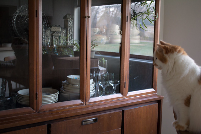 the kitty in the hutch