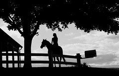 Eventing Horse Silhouette Editorial24 Christopher Navin Tags Ranch Blackandwhite Horse Silhouette