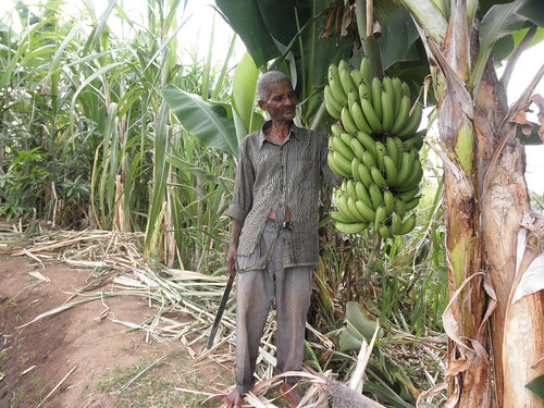 Banana and sugarcane on the dyke of a pond, Minama, Zomba, Malawi. Photo by Asafu Chijere, 2010