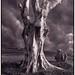 lady_tree
