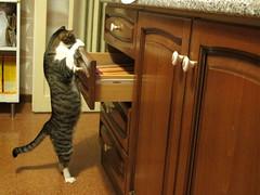 Ellen-ik in azione 2/9 (Alfredo Liverani) Tags: italien italy pet cats pets faience cat ellen italia gatos gato katze gatto katzen gatti italie emiliaromagna romagna faenza gatte gatta faventia aliceellen