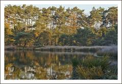Meertjesven (Esther Crauwels) Tags: autumn trees reflection tree fall water netherlands dutch forest bomen sony herfst nederland sunny boom marsh bos zon picnik ochtend reflectie waalre zonnig meertjesven