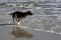 Long Island, New York (Bravo213) Tags: ocean light shadow people dog flower beach water sand dune marsh organic cy jonesbeach bigmomma longislandnewyork challengeyouwinner friendlychallenges thumbsupchallenge thechallengefactory