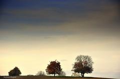 (stefano magon) Tags: blue autumn winter sky tree nature alberi landscape switzerland nikon europe nuvole hiking natura basel albero inverno autunno giardino basilea d90 blinkagain bestofblinkwinners blinksuperstars rememberthatmomentlevel1 bestofsuperstars rememberthatmomentlevel2 rememberthatmomentlevel3
