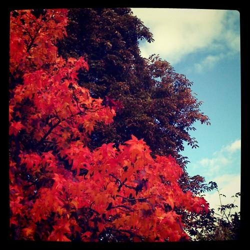 Herbstfarben fetzen!