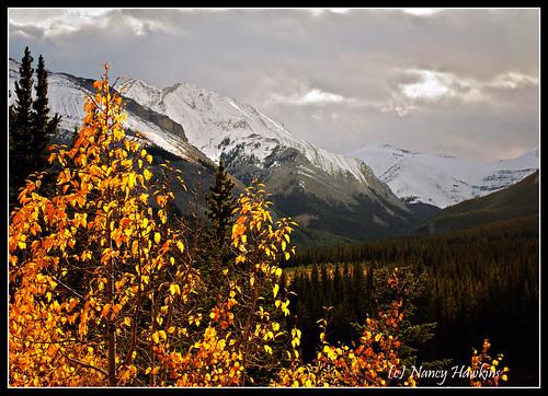 Rocky Mountain Fall by Nancy Hawkins