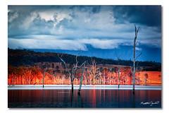 Lake Moogerah (ii), Queensland (Matthew Stewart | Photographer) Tags: trees red sky orange lake reflection water clouds sunrise dead matthew hill australia hills stewart qld queensland oranges moogerah