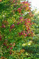 fall-9750.jpg