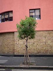 Strawberry tree (Arbutus unedo) street tree (P_L_Wood) Tags: london londonbridge bermondsey arbutus southwark se1 strawberrytree arbutusunedo streettree