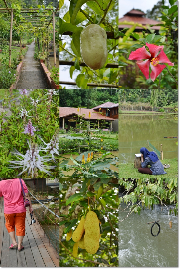 Aman Rimba Private Estate Janda Baik Pahang An Idyllic Retreat From Kl City Motormouth From Ipoh Asian Food Travel Blog