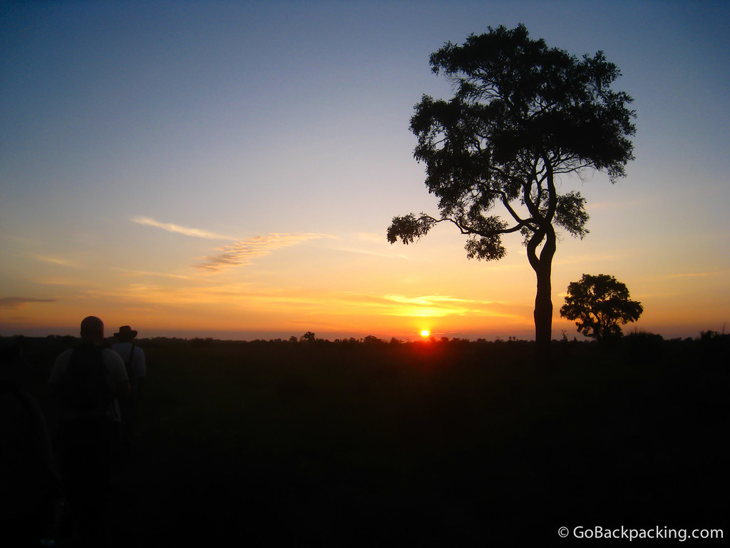 Sunrise game walk in the Okavango Delta, Botswana