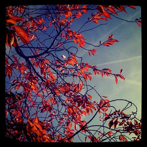 Typisches Herbstfoto...