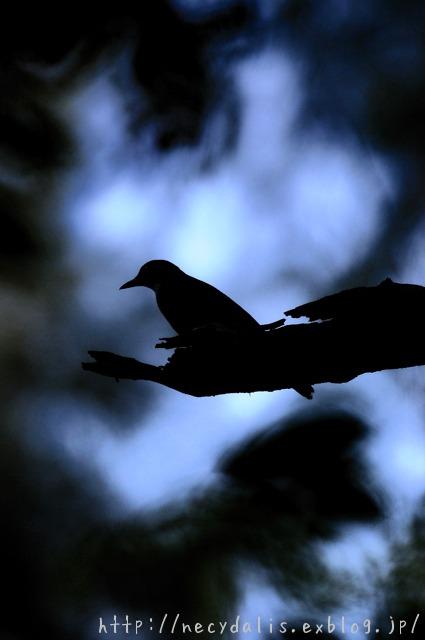 a bird in the shade...