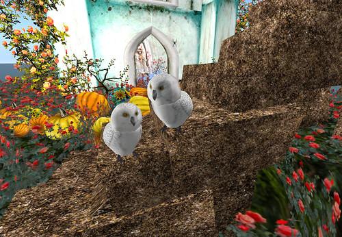 Voc linda 3 by Cherokeeh Asteria