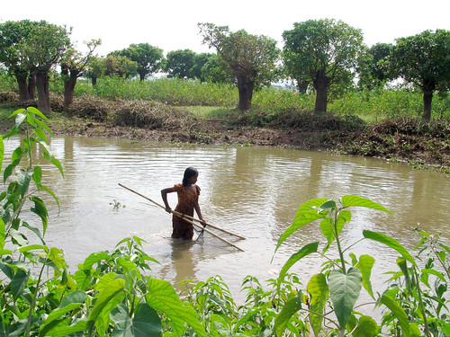 Woman catching pond fish, Bangladesh. Photo by WorldFish, 2006