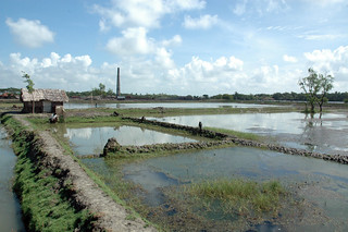 Aquaculture, Bangladesh. Photo by WorldFish, 2008